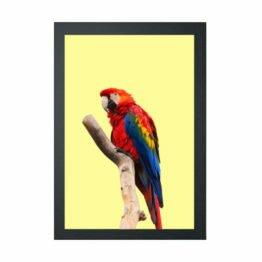 plakat macaw