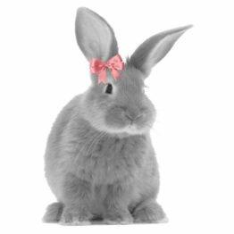 naklejka królik