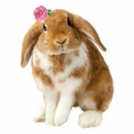 naklejka królik zając kolorowe naklejki