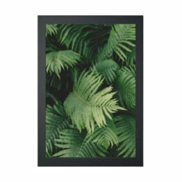 plakaty botaniczne paprocie