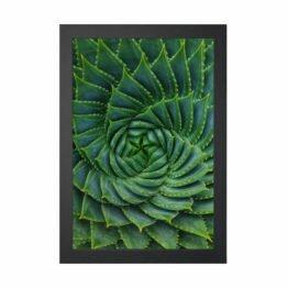 plakaty botaniczne z aloesem
