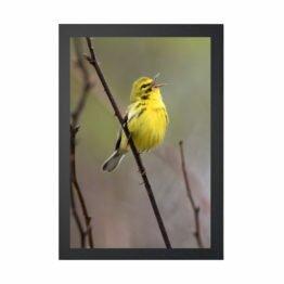 plakaty ptaki
