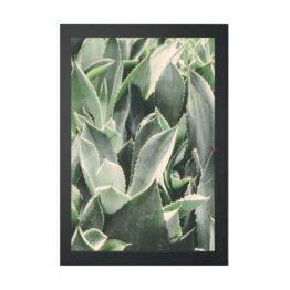 plakaty botaniczne lublin