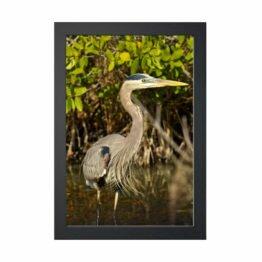 plakat czapla siwa natura przyroda