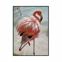 plakat pink flamingo